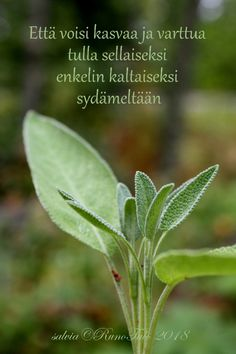 Affirmation Cards, Salvia, Affirmations, Plant Leaves, Poems, Quotes, Plants, Quotations, Sage