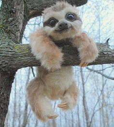 Here is a picture of a baby sloth. You can also find a VIDEO of a REAL sloth on the IG of who is an amazing VO artist that I met this weekend at Im totally watching this sloth video AGAIN after I post this. Baby Animals Pictures, Cute Animal Photos, Funny Animal Pictures, Animals And Pets, Smiling Animals, Animal Pics, Fluffy Animals, Big Eyed Animals, Cute Sloth Pictures