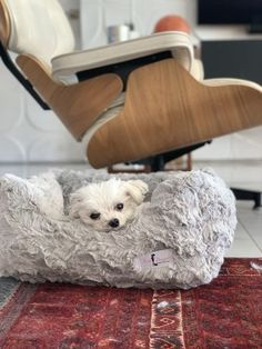 """Our little Maltese Iggy loves his new bed, it's very soft and luxe. He has the size large, and he is 4 pounds. :)"" - Melody B. Dog Boutique, New Beds, Pet Products, Maltese, Dog Bed, Love Him, Cute Dogs, Diva, Pets"