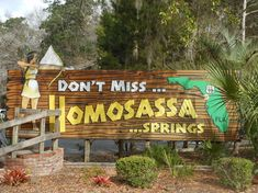 Book your tickets online for Ellie Schiller Homosassa Springs Wildlife State Park, Homosassa Springs: See 1,898 reviews, articles, and 1,597 photos of Ellie Schiller Homosassa Springs Wildlife State Park, ranked No.1 on TripAdvisor among 3 attractions in Homosassa Springs.