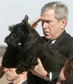 RIP Barney :( George W. Bush's Scottish terrier Barney has died, Feb. 2013 God speed to the rainbow bridge. Dogs And Puppies, Doggies, Family Dogs, Westies, Little Dogs, Dog Love, Dog Training, Scottish Terriers, Fur Babies