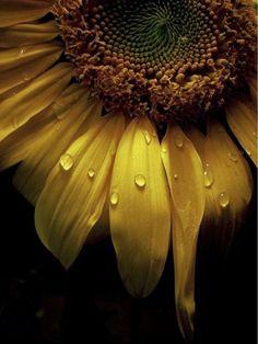flowersgardenlove:  The Submissive Minds Beautiful