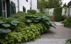 Small garden project – Begijnhof te Hoogstraten by Archi-Verde. The city garden of Pablo Vicens Hualde in Madrid / Un jardin de buis Source by SvetlanaLavrentyeva Garden Shrubs, Landscaping Plants, Shade Garden, Garden Paths, Outdoor Plants, Outdoor Gardens, Design Jardin, Small Garden Design, Shade Plants