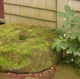 How to grow and maintain moss