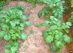 Lavori di luglio-agosto - Coltivare l'orto