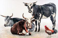 nguni or Zulu cattle paintings Oil paint on canvas Zulu, Cattle, Cow, Moose Art, Paintings, Canvas, Animals, Gado Gado, Tela