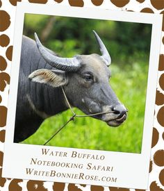 Notebooking Safari - Vietnam and the Water Buffalo. Another animal that I want to show you on our trip is the water buffalo. Water buffalo are extremely important to farmers in Vietnam. Farmers use the water buffalo to plow their land and do heavy farm work.