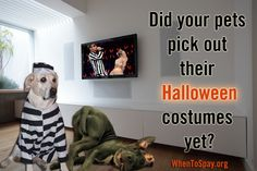 Did your #pets pick out their #Halloween #costumes yet? #MileyCyrus #twerking