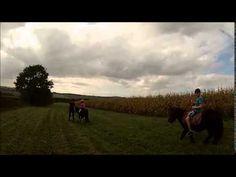 equisense | Ponyritjes in Heuvelland