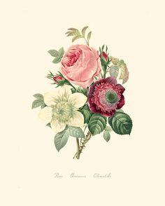 Vintage Flower Bouquet of Rose, Anemone and Clematide Print 8x10 P204. $14.00, via Etsy.