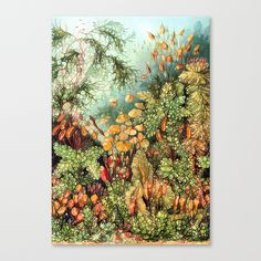 https://society6.com/product/botanic-vintage_stretched-canvas?curator=listenleemarie