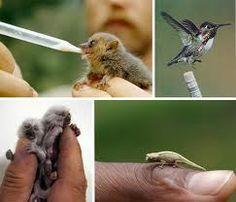 cute small animals - Buscar con Google