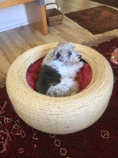 Ariel testing the new cat bed. Pet Furniture, Bespoke Furniture, Funky Design, Ariel, Bean Bag Chair, Color Schemes, Dog Cat, Decorating, Pets