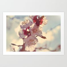 Buy Cherry Blossom Art Print by gemmaeleanore. Worldwide shipping available at Society6.com. Just one of millions of high quality products available.