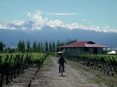The Mendoza province sits in the western-central region of Argentina, just over 600 miles (1,000 kilometers) west of Buenos Aires. The province shares a border with the provinces of San Juan, San L…