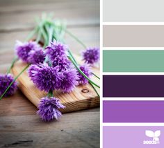 Color Chive Palette: pops of purple and lavender complemented by shades of turquoise and gray. A very comforting, upbeat color scheme.