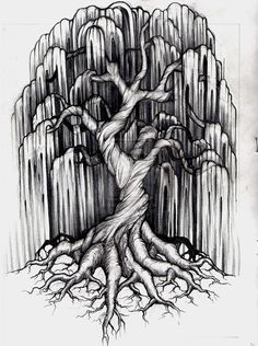 willow tree with roots - Google Search