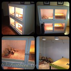 My handmade brooder I built this summer. It is 2 stories with LED lighting and Brinsea EcoGlow brooder heaters on each level.