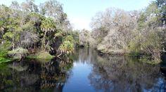 Hillsborough River State Park near Tampa, FL - Photo by Debby Lundmark