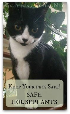 House Plants safe for cats - which indoor plants are toxic to cats? We will help you to  select cat friendly house plants that won't harm your pet. You can have cats and house plants!