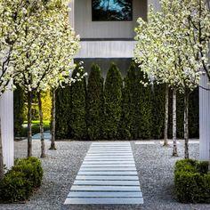 Urban Garden Design Emerald Green Thuja as accent wall