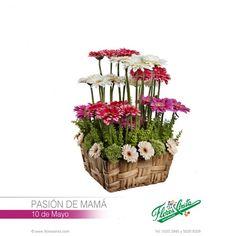 Decoraci n arreglos florales 10 de mayo on pinterest for Decoracion 10 de mayo