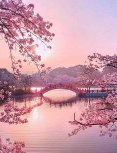 Travel Discover Raindrops and Roses - - Oliver - Nature travel Nature Pictures Beautiful Pictures Landscape Pictures Beautiful World Beautiful Places Beautiful Person Beautiful Scenery Cherry Blossom Japan Japanese Cherry Blossoms Aesthetic Japan, Travel Aesthetic, Nature Aesthetic, Japanese Aesthetic, Beautiful Nature Wallpaper, Beautiful Landscapes, Landscape Photography, Nature Photography, Japan Travel Photography