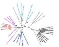 """Forscher finden """"fremde Gene"""" in Menschen und Tieren . . . http://grenzwissenschaft-aktuell.blogspot.de/2015/03/forscher-finden-fremde-gene-in-menschen.html . . . Abb.: Crisp et al. Genome Biology"""