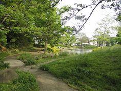 緑一色の中に黄色のアヤメ?が映える桜台公園水面のさざなみがとてもきれいです