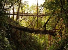 "In the wettest place on Earth, the village of Mawsynram in Meghalaya, India are some of the most fascinating bridges you'll ever see. These ""living bridges"" are formed by locals who have trained the roots of rubber trees to grow into natural bridges. They are sturdy enough to far outlast man-made wooden structure bridges. Because …"