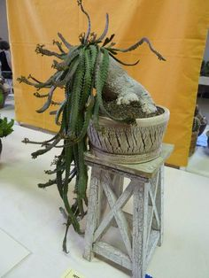 Euphorbia stellata. It looks like a creature with paws and a head full of tentacles, something out of a movie. Plant and pot by Keith Kitoi Taylor