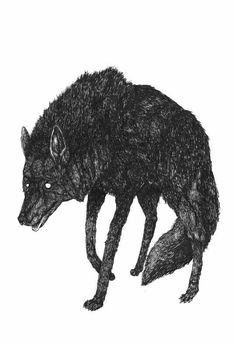 The line work on this wolf I think is incredible from the stance to the wolfs expression ties in well with its whole character. Wolf Illustration, Teen Wolf, Wolf Heart, Cassandra Calin, Half Elf, The Wolf Among Us, Timberwolf, Bad Wolf, Claude Monet