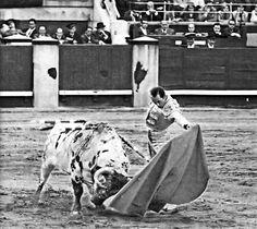 Antoñete, bullfighter