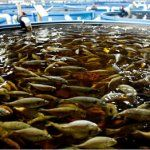 7 Types Of Fish You Should Never Consider Eating