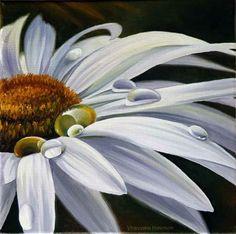 close up daisy/waterdrops  varvara harmon