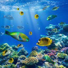 ocean life pics | ocean acidification kills marine life