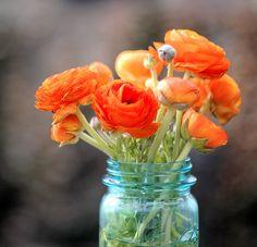 orange ranunculus & aqua ball jar. amazing.So simple yet so beautiful