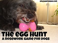 Do you want to play a fun Easter nose work game with your dog? We're sharing our tips!