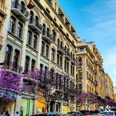 Beirut trees amazingly turn purple in Spring الشجر ببيروت بصير بنفسجي رائع بالربيع By Pia Francis  #Lebanon #WeAreLebanon