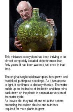 Garden in a pot, miniature ecosystem, thriving
