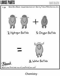Where do water buffalo come from?