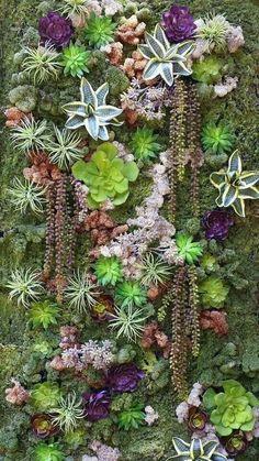 Jardin vertical. Suculentas variadas