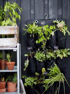 Väx ut på altanen | Livet Hemma – IKEA