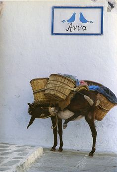 My Life Is Greek. A cute little Greek donkey Corfu, Crete, Mykonos, Santorini, Hotel Marseille, Restaurant Mexicano, Greek Isles, Arte Popular, Albania