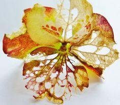 Hydrangea flower
