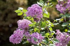 Top 10 Shrubs For Your Small Space Garden from Birds & Blooms Magazine