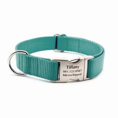 Teal Webbing Dog Collar with Laser Engraved Personalized Buckle – Flying Dog Collars