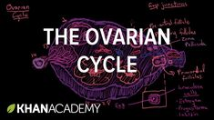 The ovarian cycle | Reproductive system physiology | NCLEX-RN | Khan Aca...