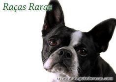 Conheça no Guia de Raças as raças mais raras de cachorros oriundas de países da Europa, Ásia e América do Norte!