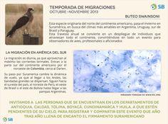 ¡ATENCIÓN! Temporada de migraciones